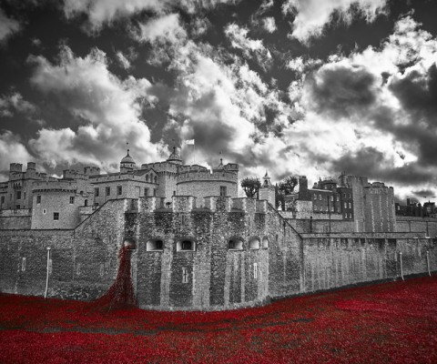 tower-poppies-fb